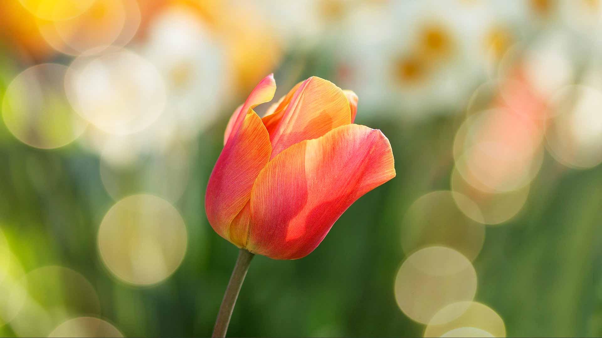 Flowers in a beautiful garden